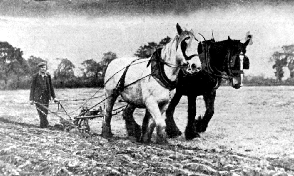 1144 Earlswood - JR Hay of Fulford Hall Farm.jpg
